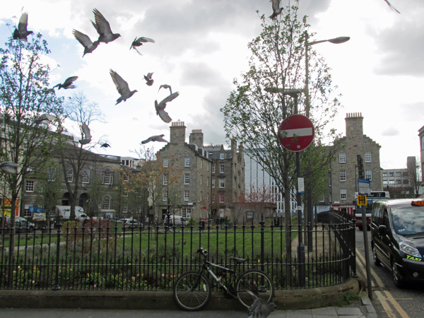 pigeons flying in edinburgh, scotland on april 14, 2014